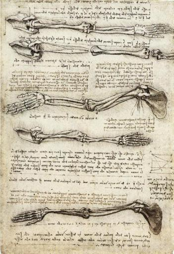 davinci_studies_of_the_arm_showing_the_movements_made_by_the_biceps