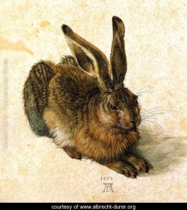 durer_young-hare-i